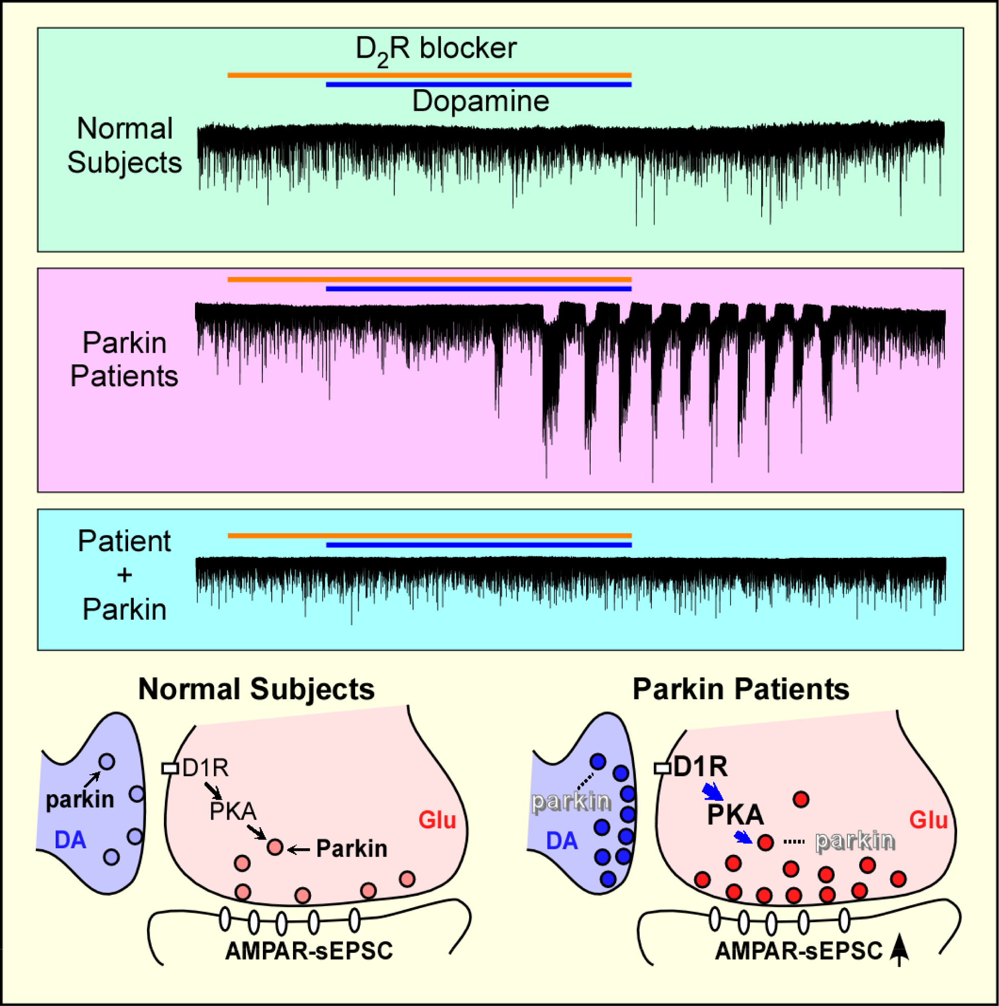 Electrophysiological changes in neurons with parkin mutations